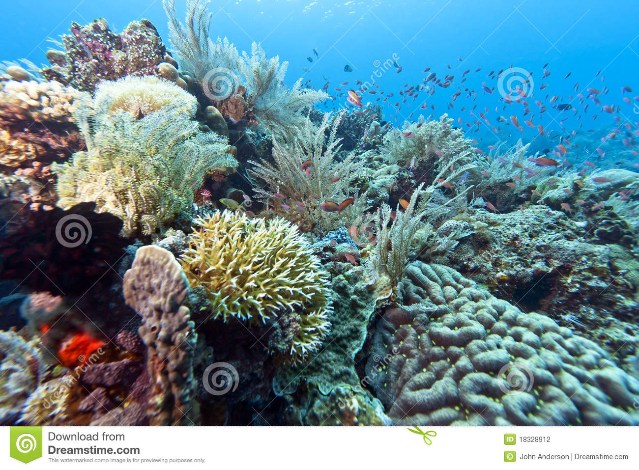Coral Garden Indonesia Stock Photography Image 18328912