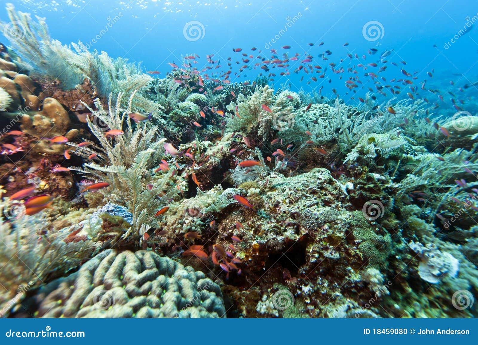 Coral Garden Indonesia Stock Photo Image 18459080