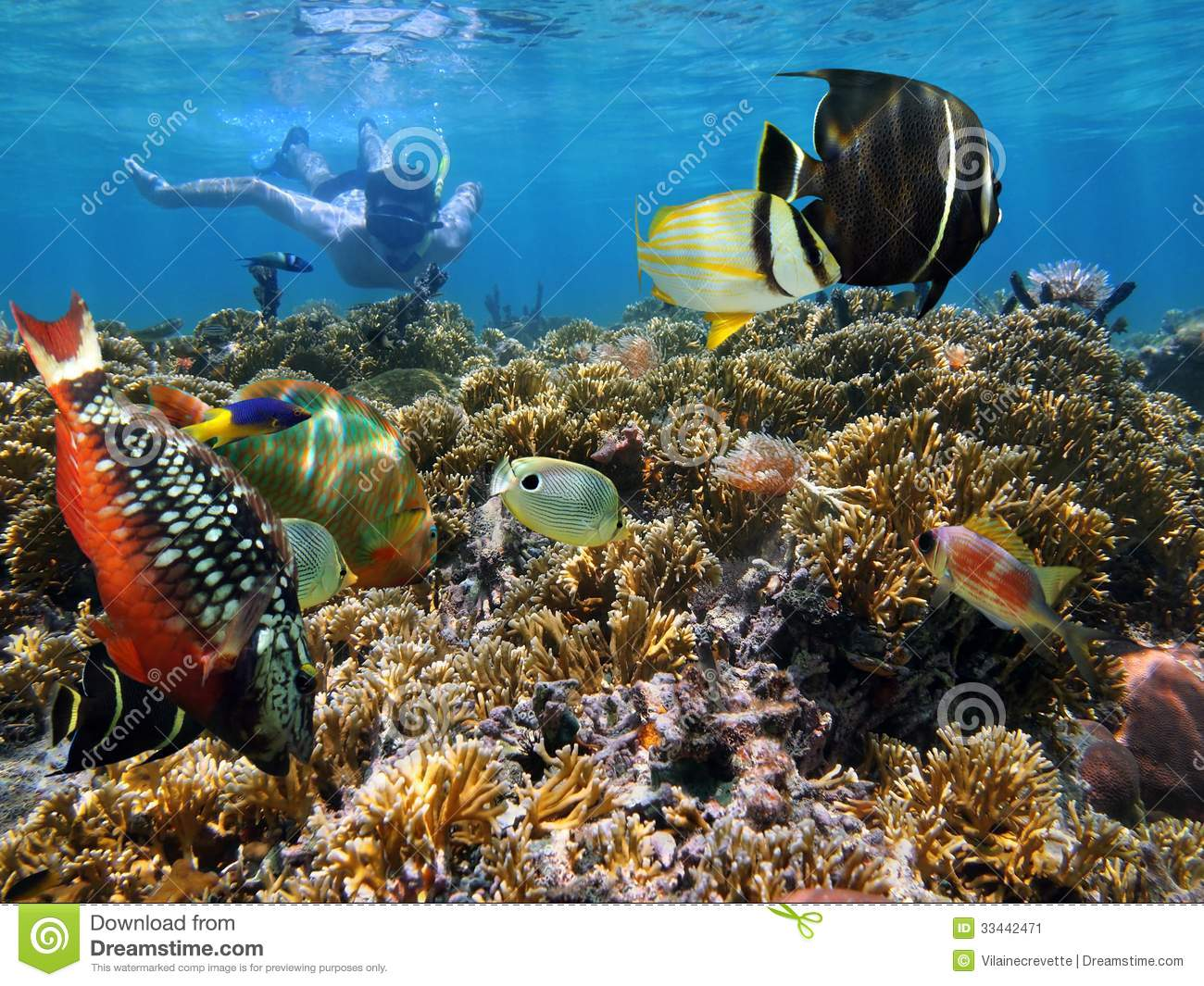 Coral Garden Snorkeling Stock Image Image Of Rica