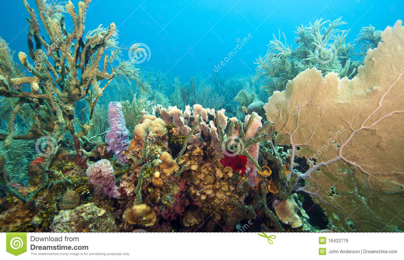 Coral Gardens Royalty Free Stock Images Image 16422779