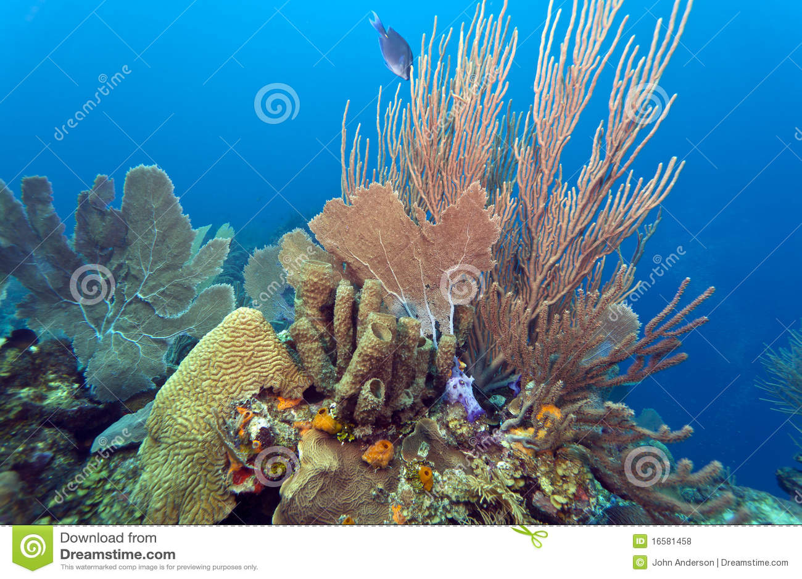Coral Gardens Royalty Free Stock Photos Image 16581458