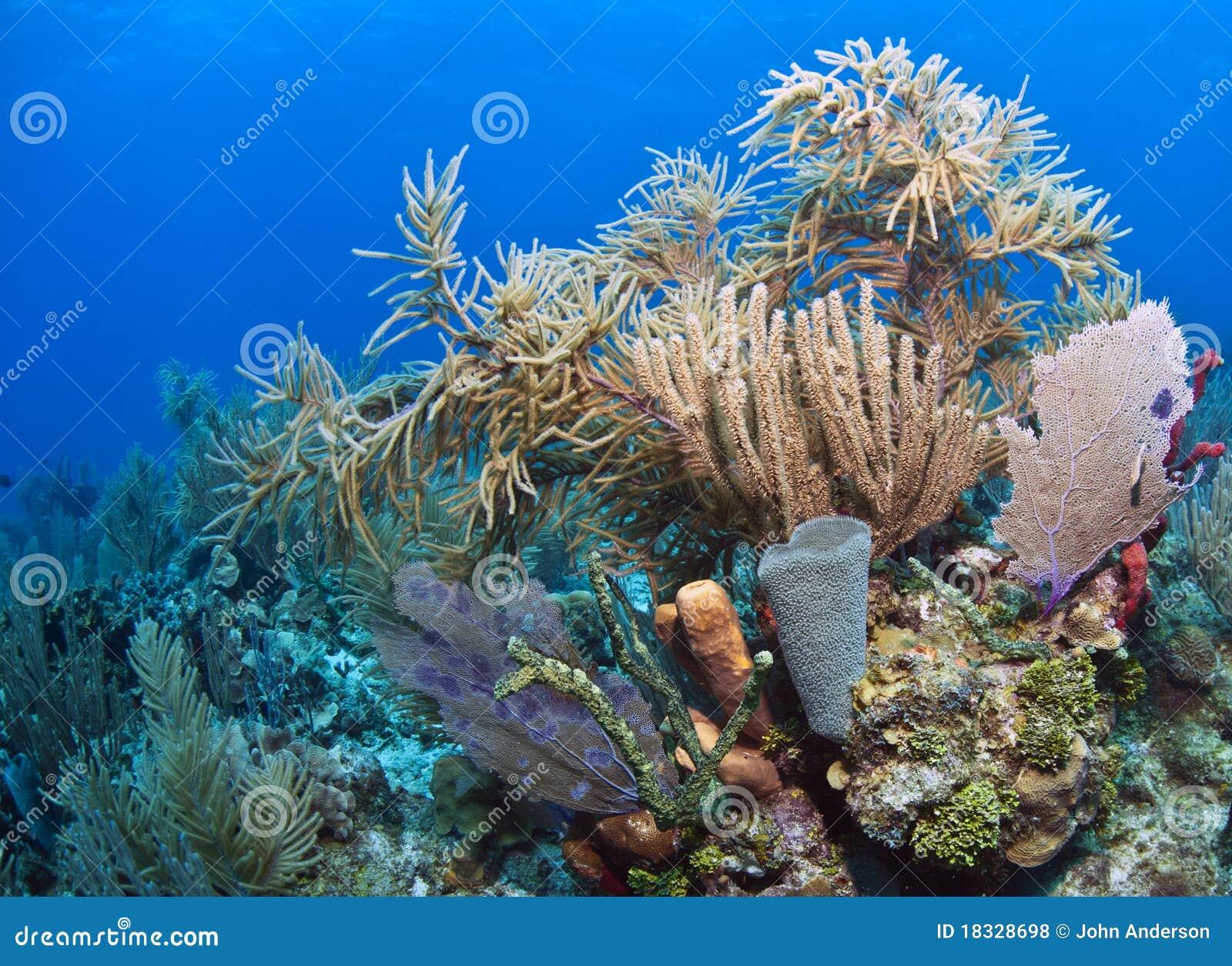 Coral Gardens Royalty Free Stock Photos Image 18328698