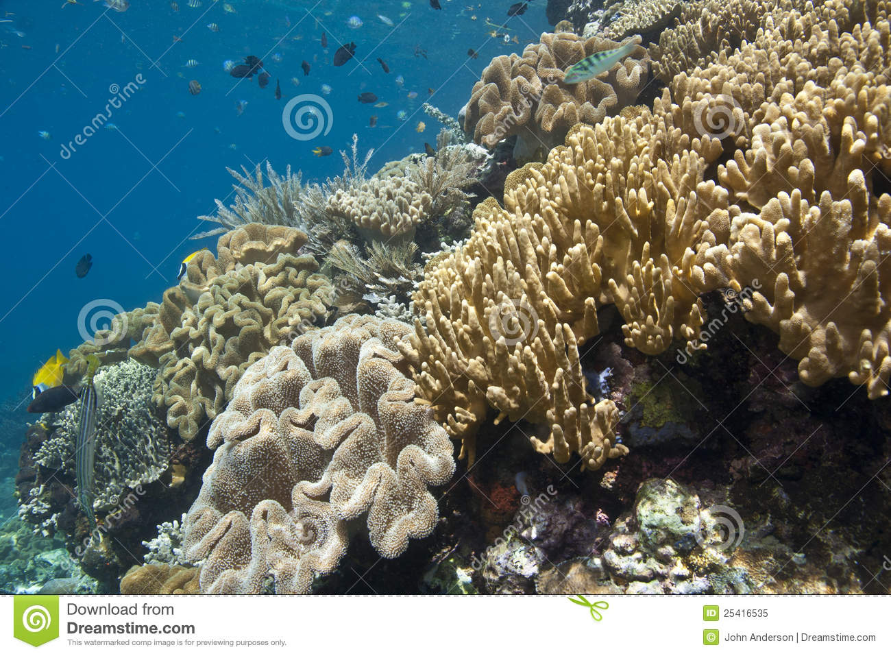Coral Gardens Royalty Free Stock Photo Image 25416535