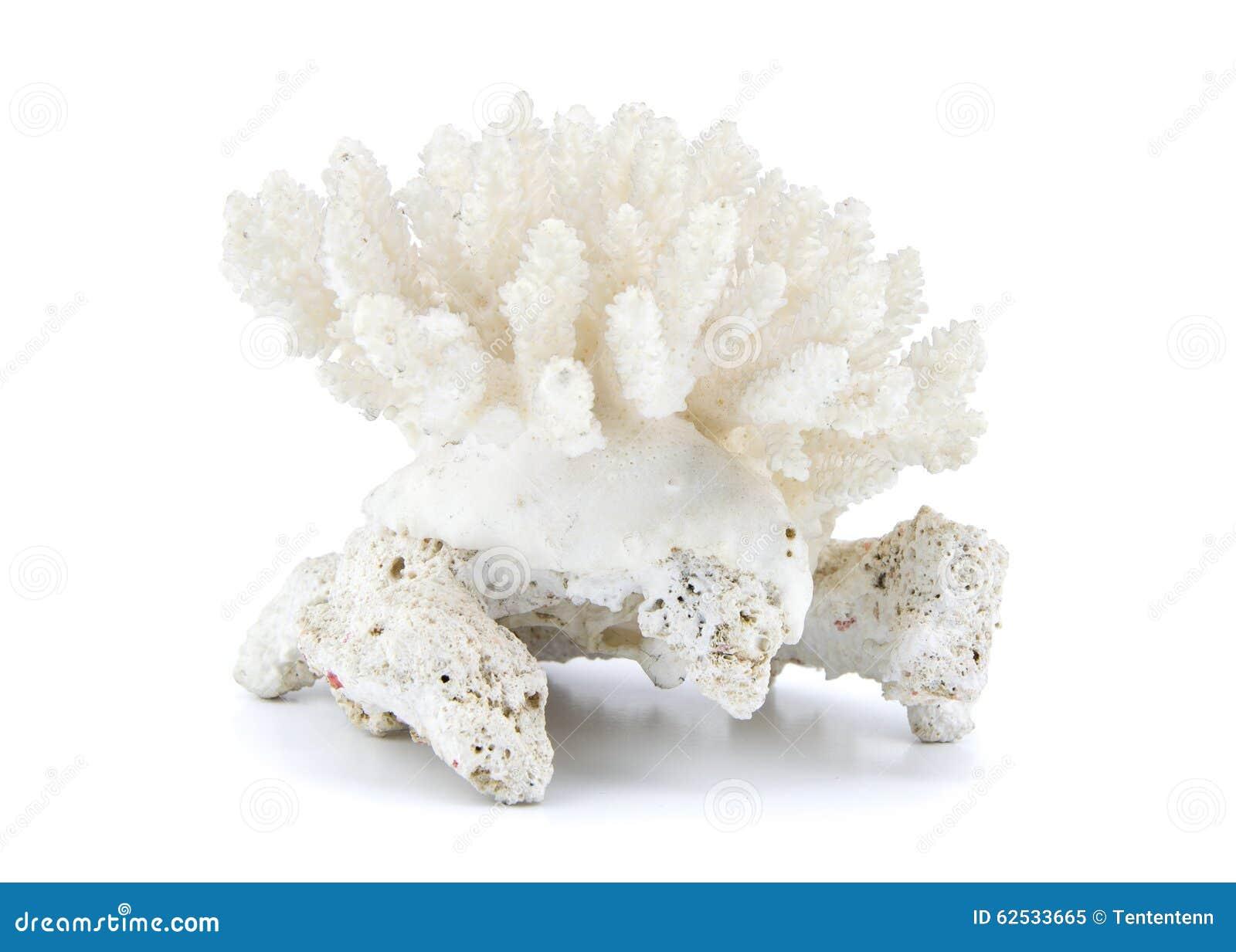 Coral isolado no fundo branco