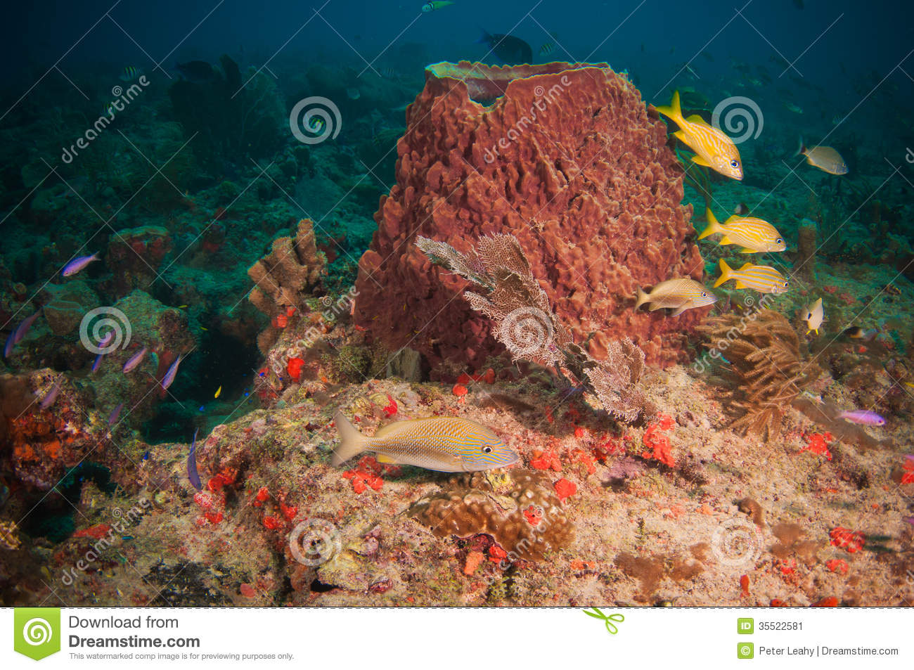 On A Coral Reef In The Atlantic Ocean Stock Image