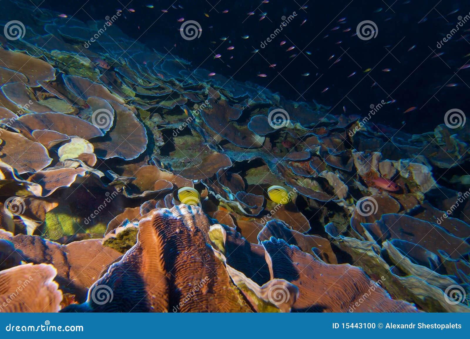 Coral reef Blue Hole, Dahab