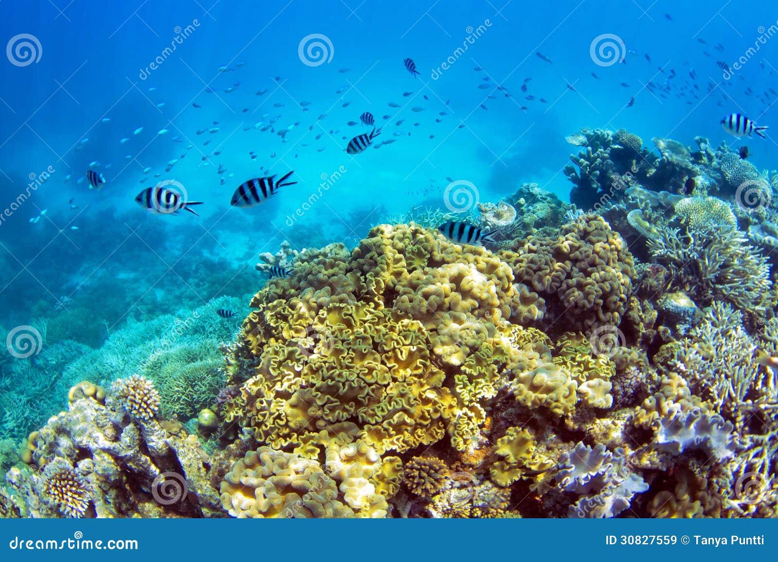 Coral Reef con la scuola del pesce