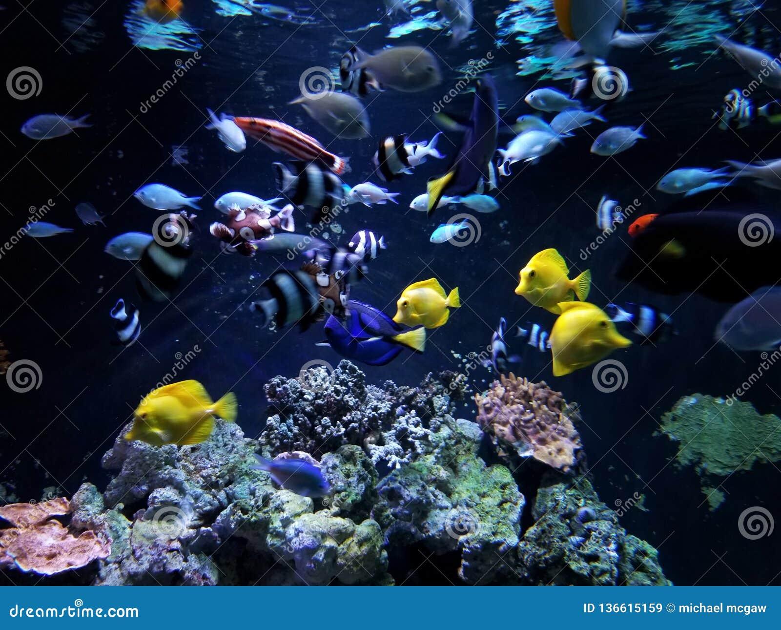 Coral Reef Feeding Frenzy subacuática