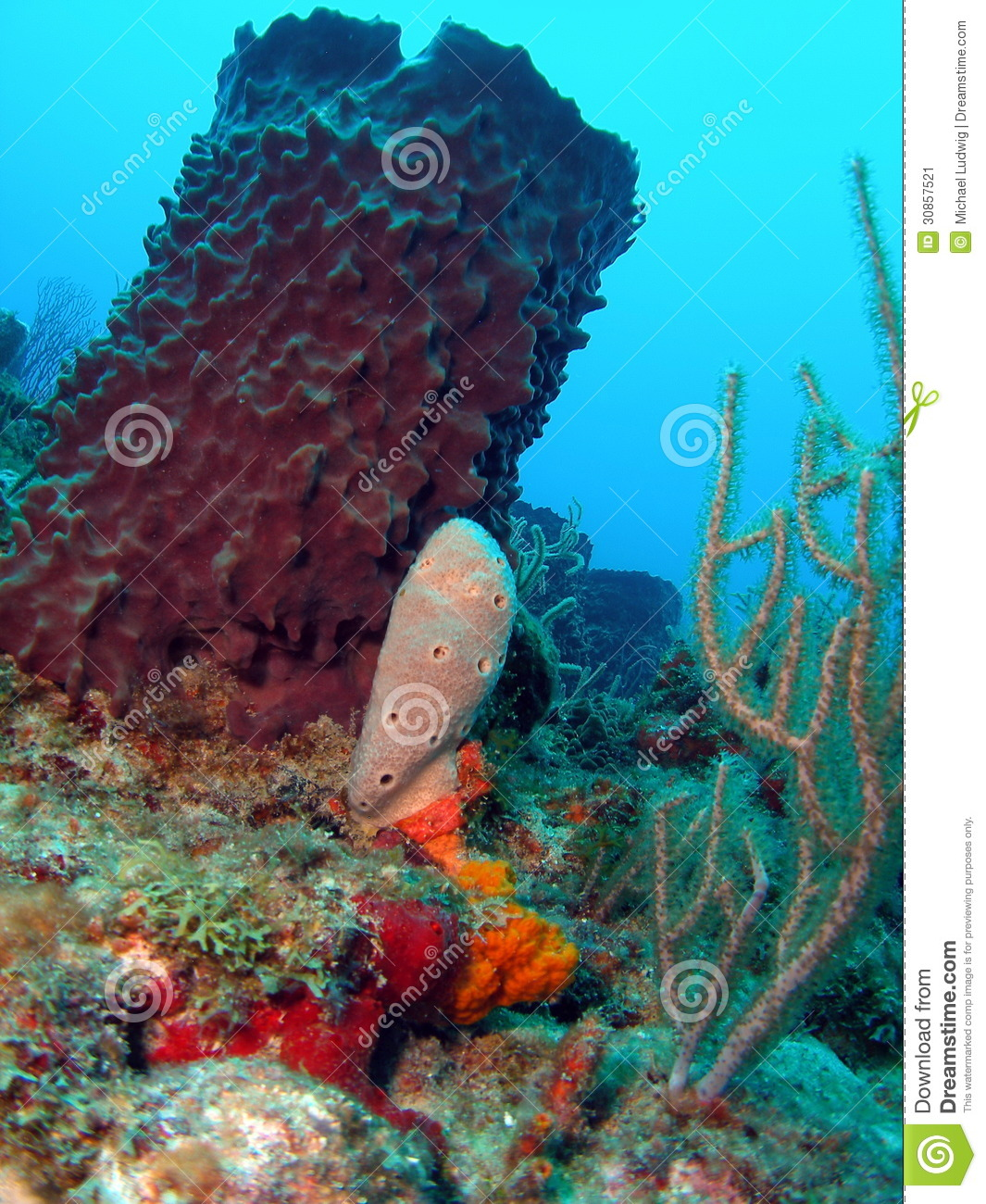 Coral Reef In 78 Feet Stock Image