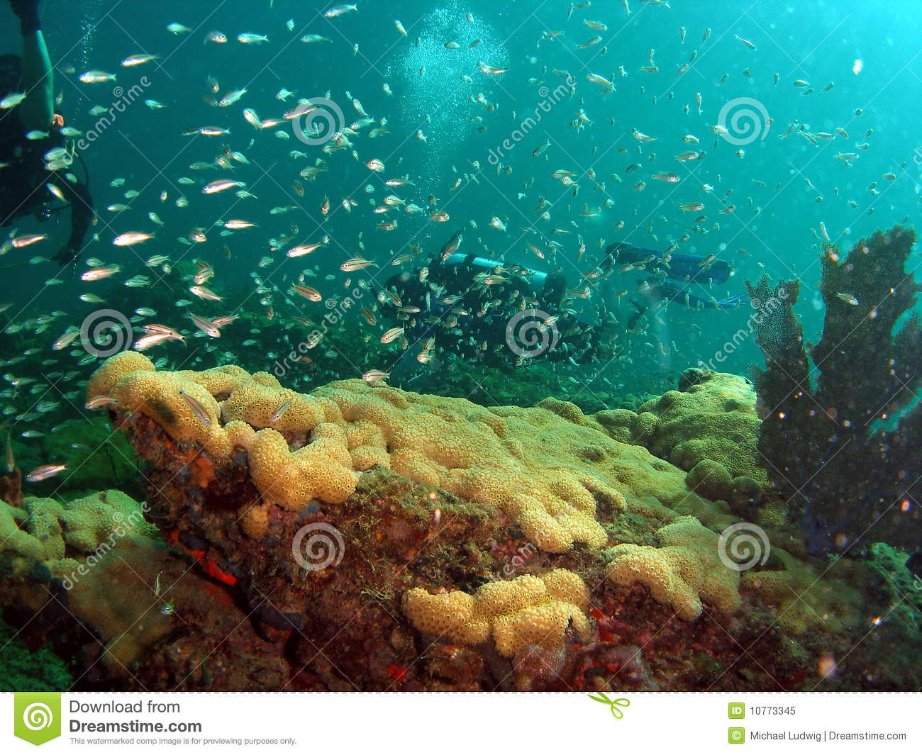 Stock Photo Coral Reef And Divers | Male Models Picture