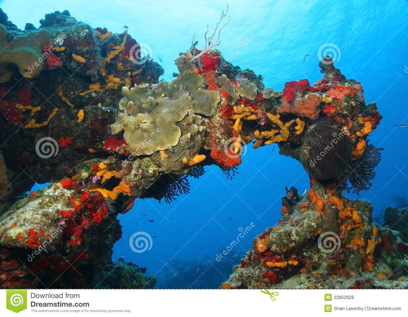Coral Reef In The Form Of An Arch Royalty Free Stock Photos ...
