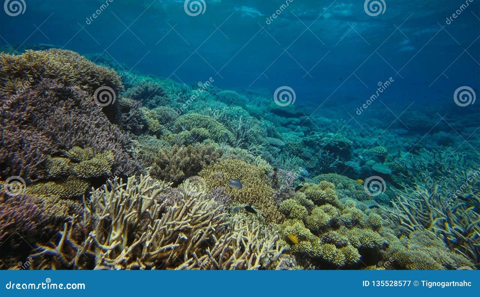 Coral Reef Great Barrier Reef Australia Underwater