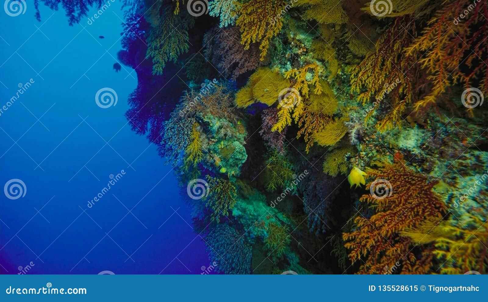 Coral reef, Great barrier reef, Australia. Underwater landscape