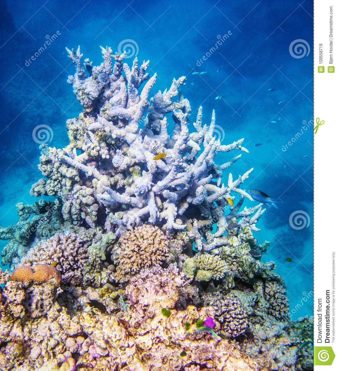 Coral Reef Background: Coral Reef On Great Barrier Reef Stock Image