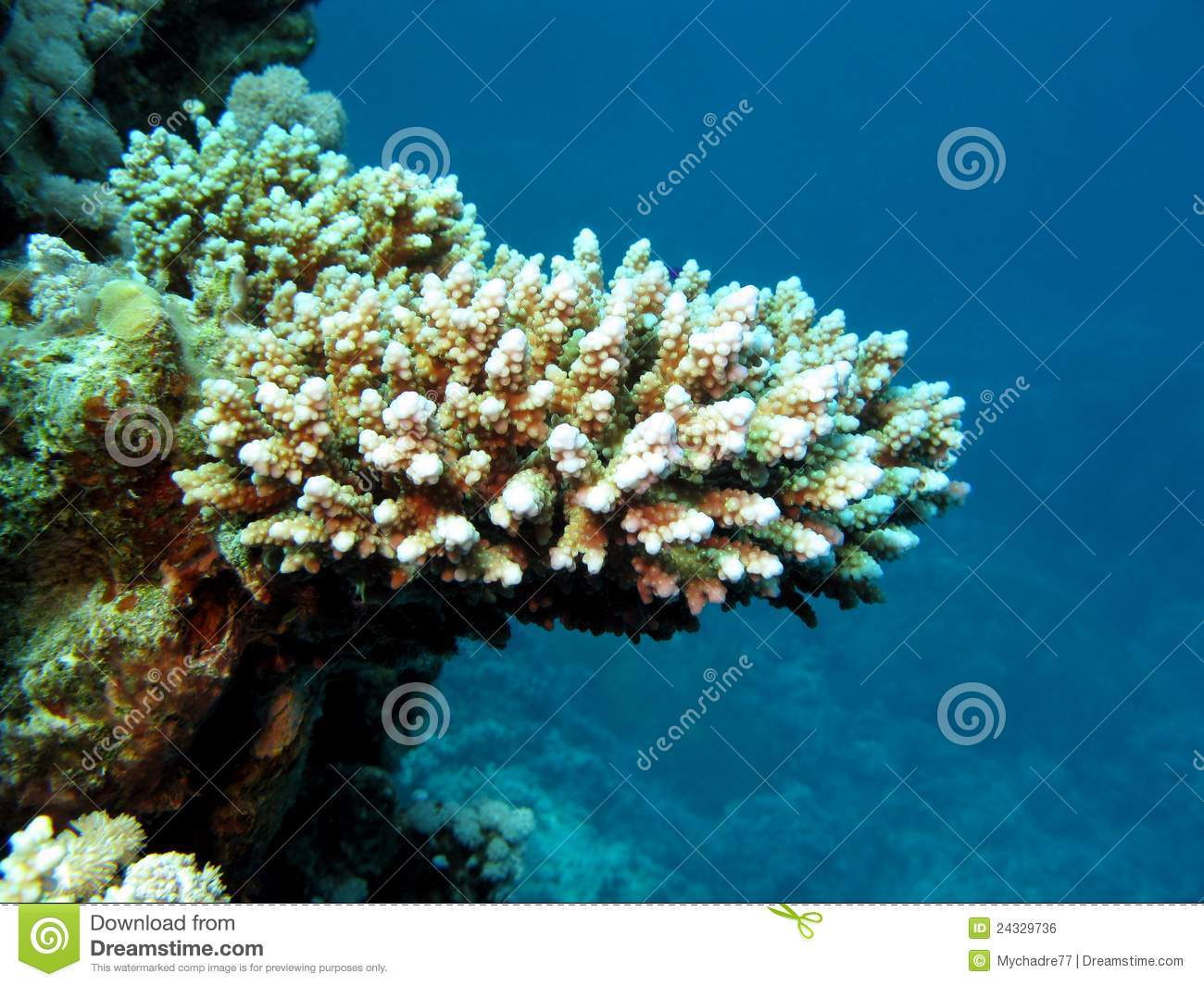 coral reef with hard coral stock photo image of exotic