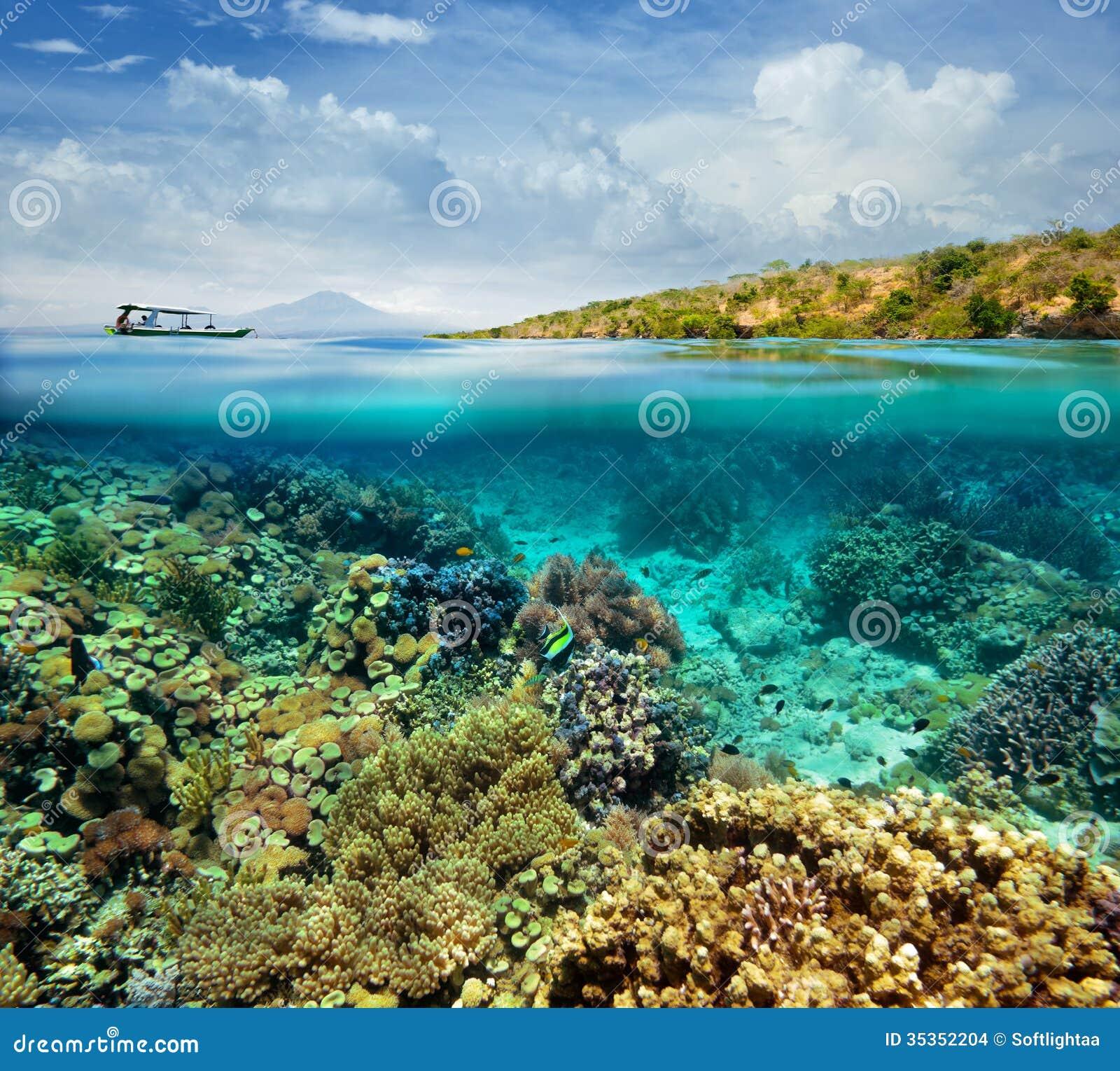 Coral Reef On The Island Of Menjangan Indonesia Stock