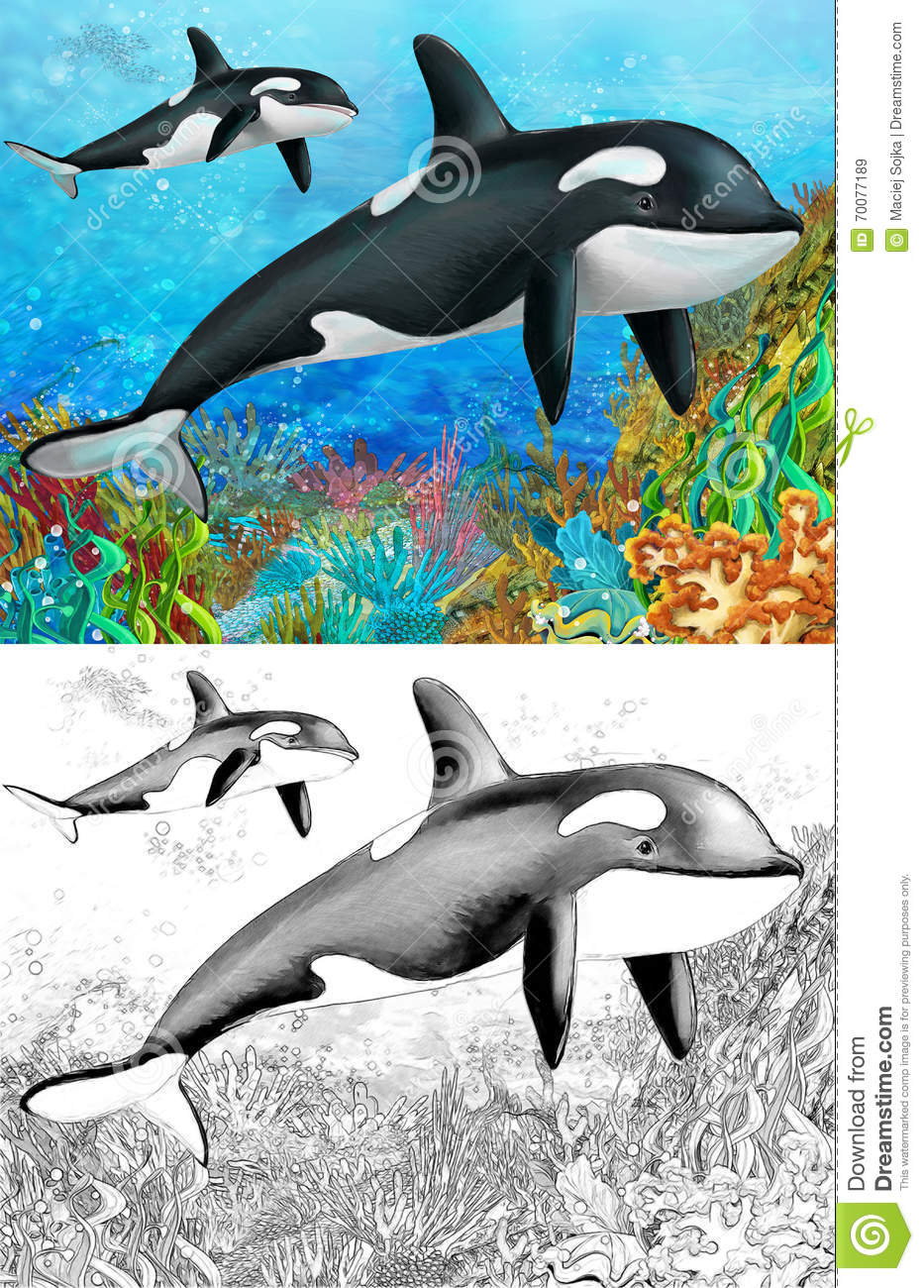 the coral reef killer whale with coloring page stock