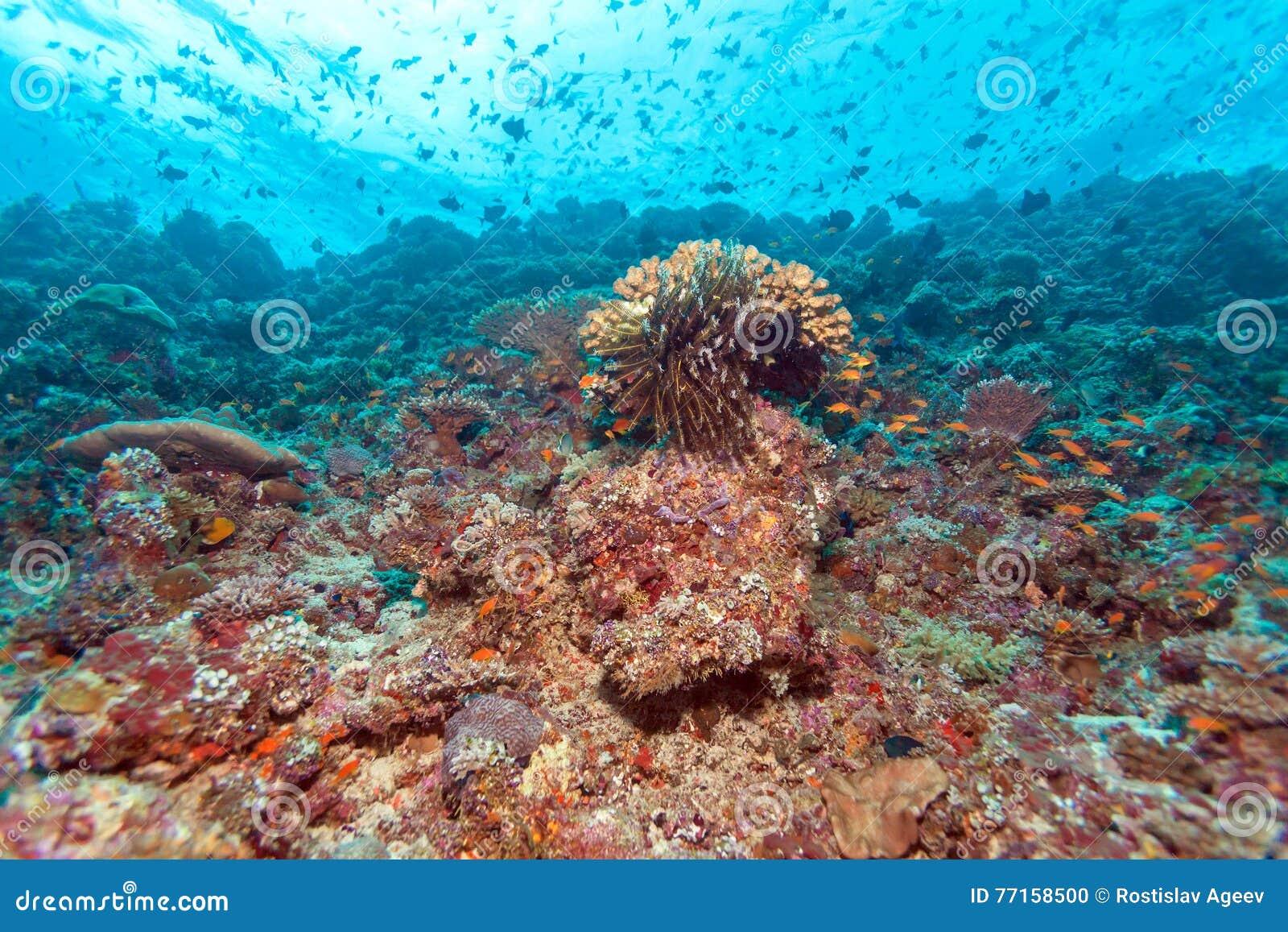 Coral Reef Landscape tropicale colorée