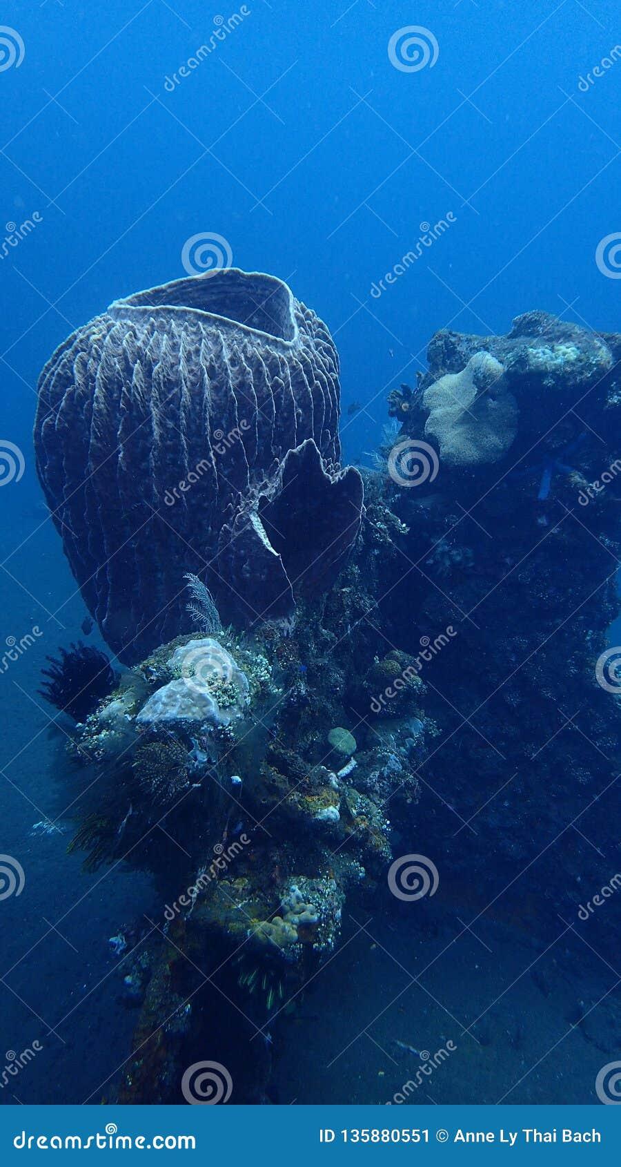 Coral reef, liberty wreck bali indonesia
