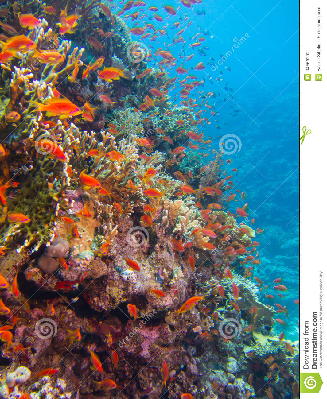 Coral Reef With Lots Of Fish Stock Photography Image