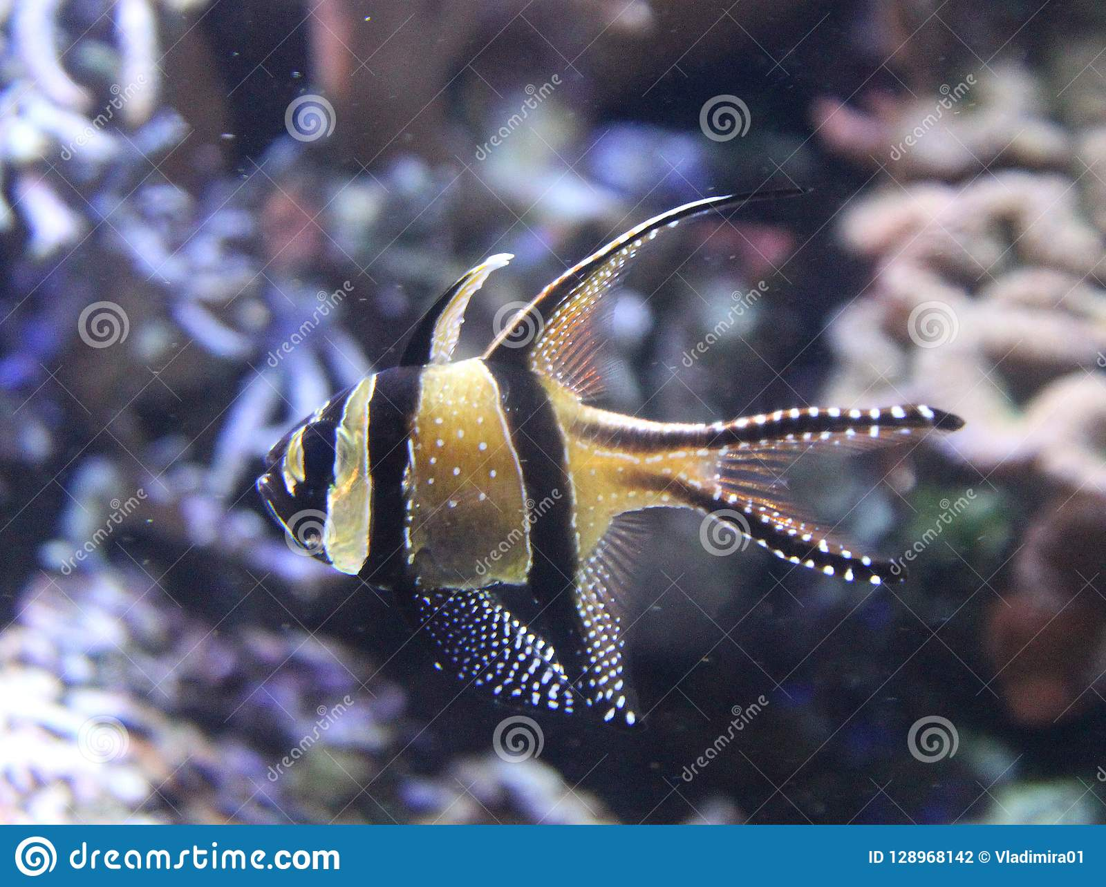 Coral Reef In A Marine Aquarium Interesting Tropical Fish In A Fish Tank Stock Photo Image Of Coral Natural 128968142
