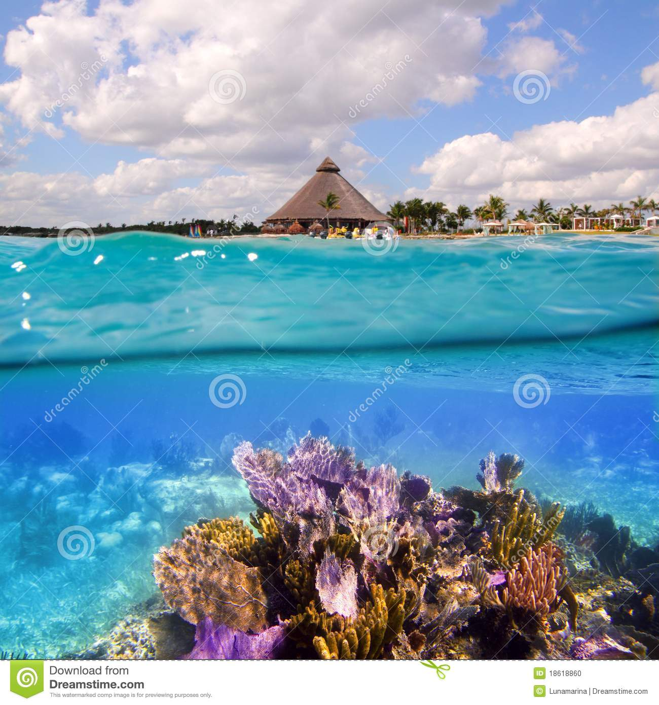 Coral Reef In Mayan Riviera Cancun Mexico Stock Photo