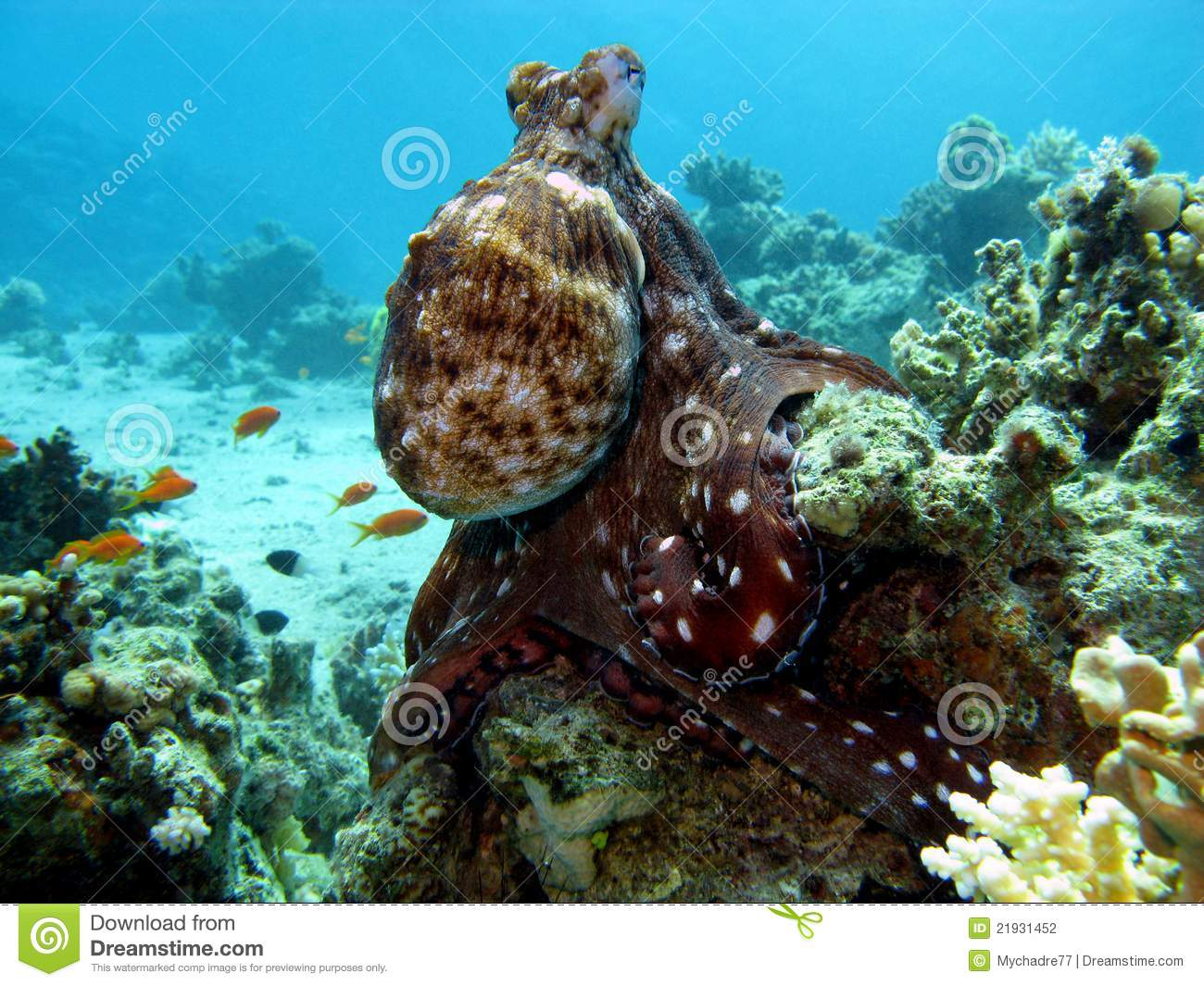 Coral Reef With Octopus Stock Photography - Image: 21931452