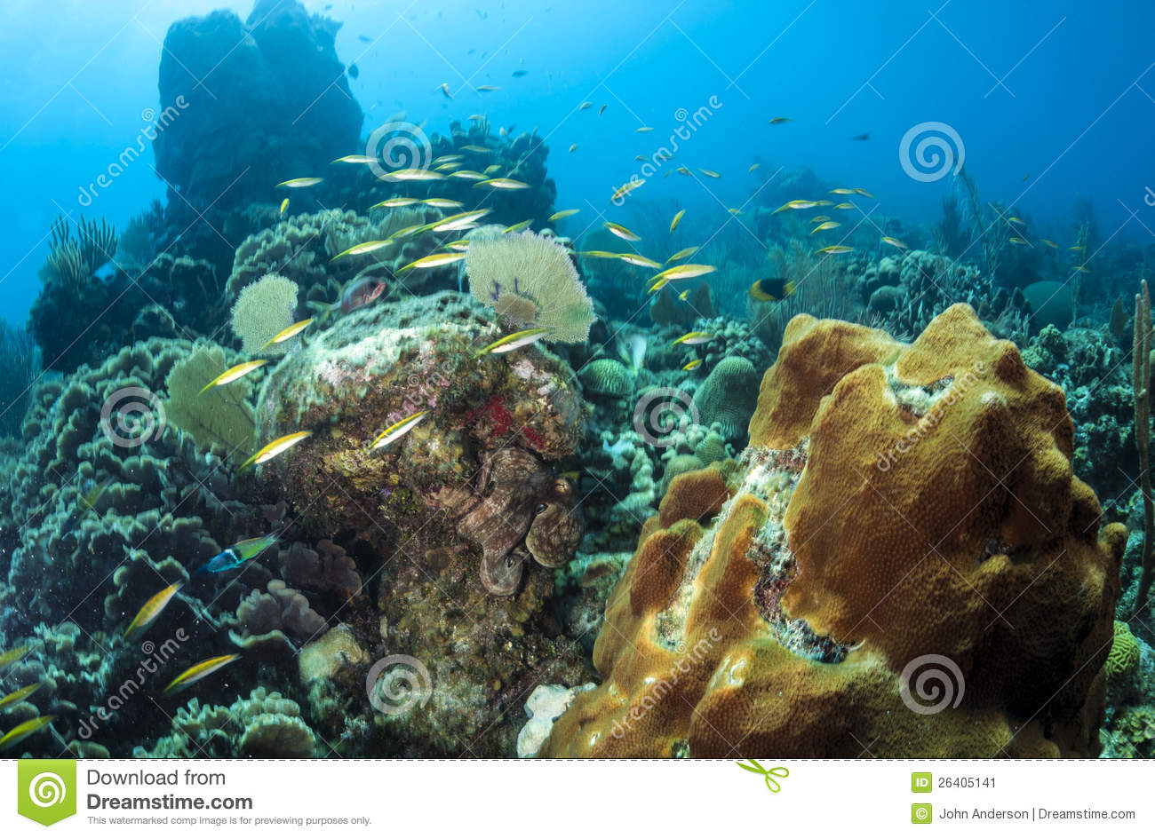 Coral Reef Octopus Stock Image - Image: 26405141