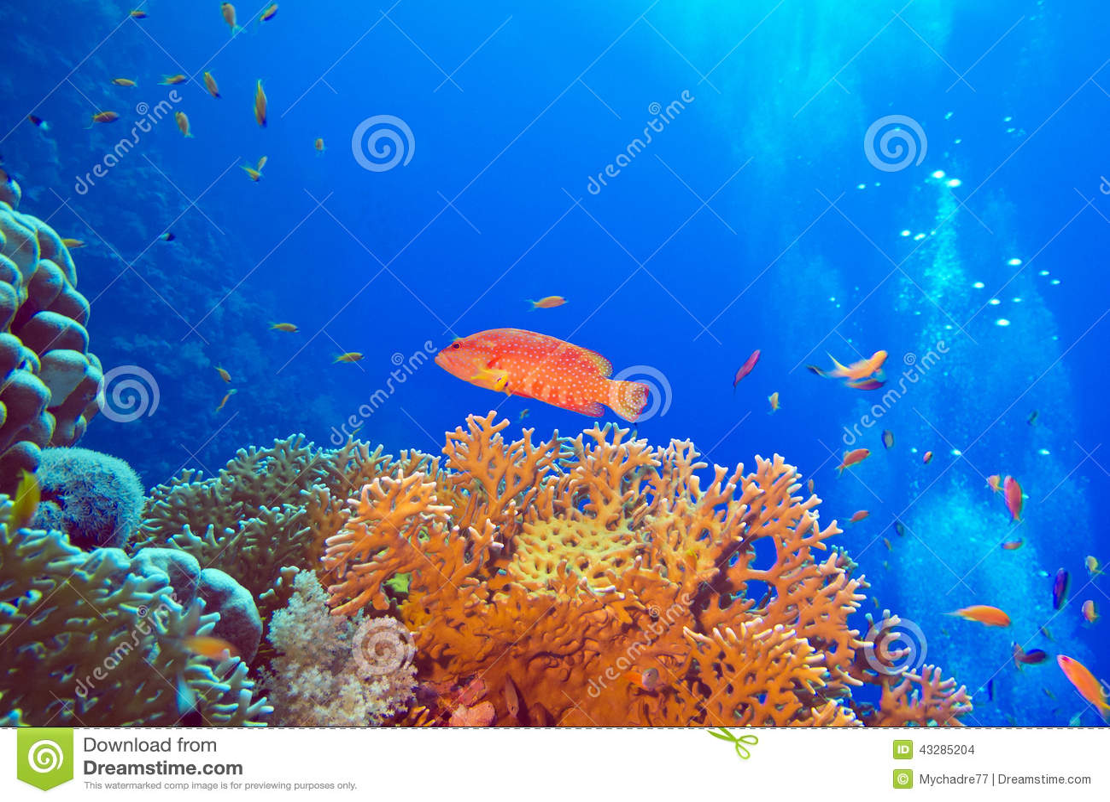 Fish at the bottom