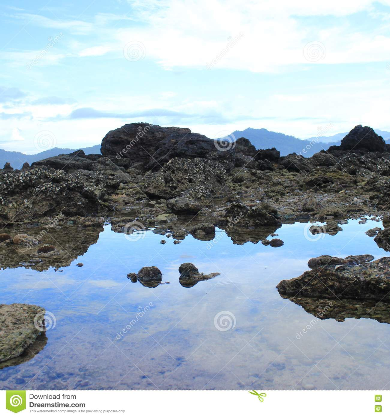 Coral Reef Stock Image. Image Of Coral, Rock, Beach, Reef