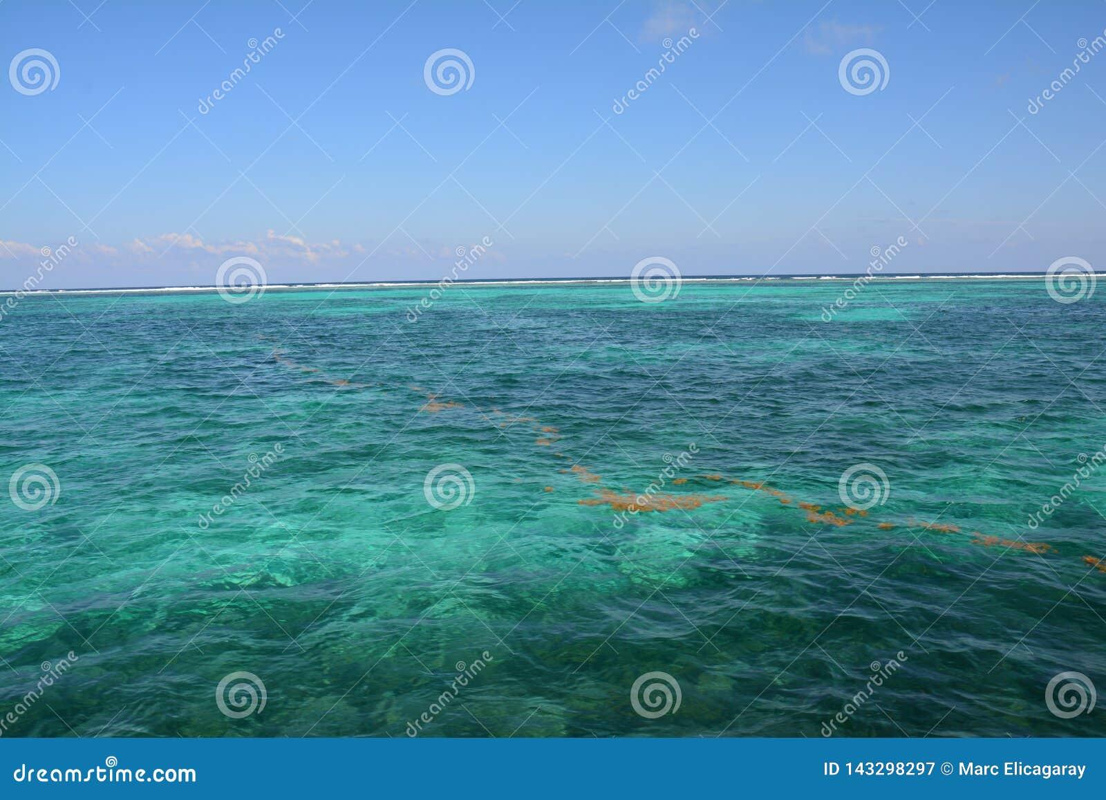 Coral Reef sur l île Belize de matoir de Caye