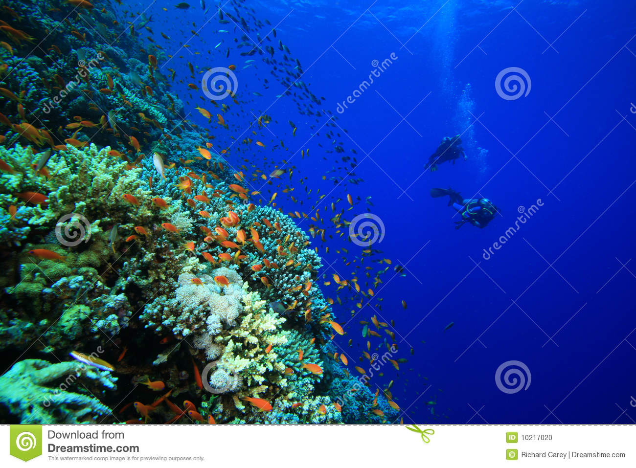 Stock photo coral reef and divers male models picture for Reef tropical fish
