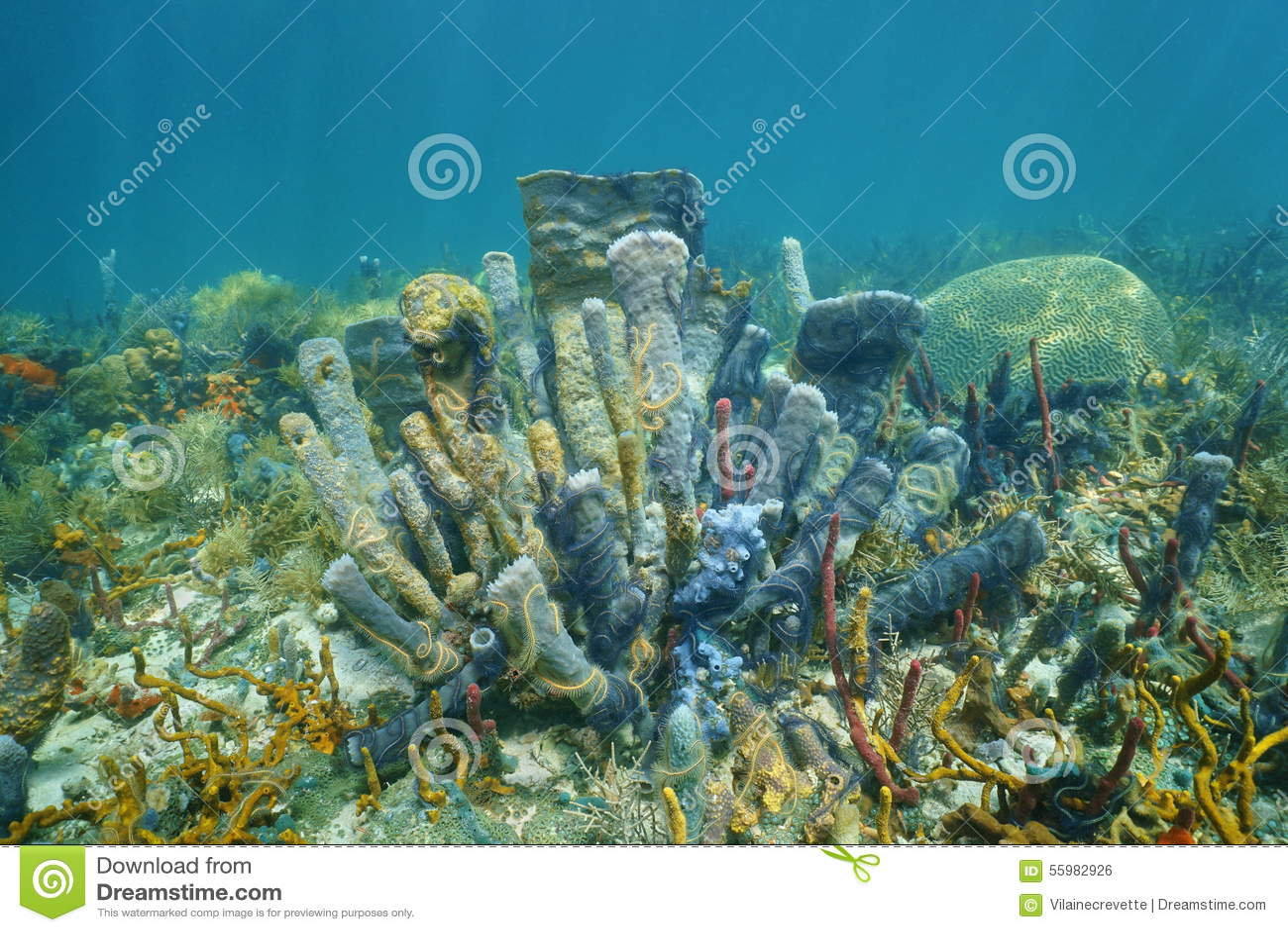 Coral Reef Underwater With Branching Vase Sponge Stock