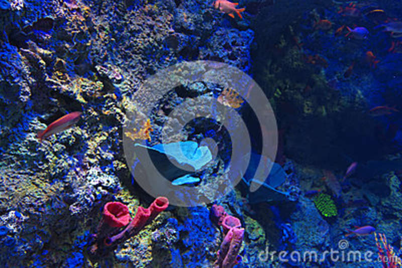Download Coral reef stock image. Image of nature, colony, colourful - 42362311