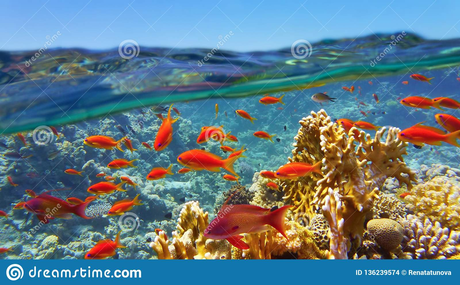 Coral reef viewed from the sea surface