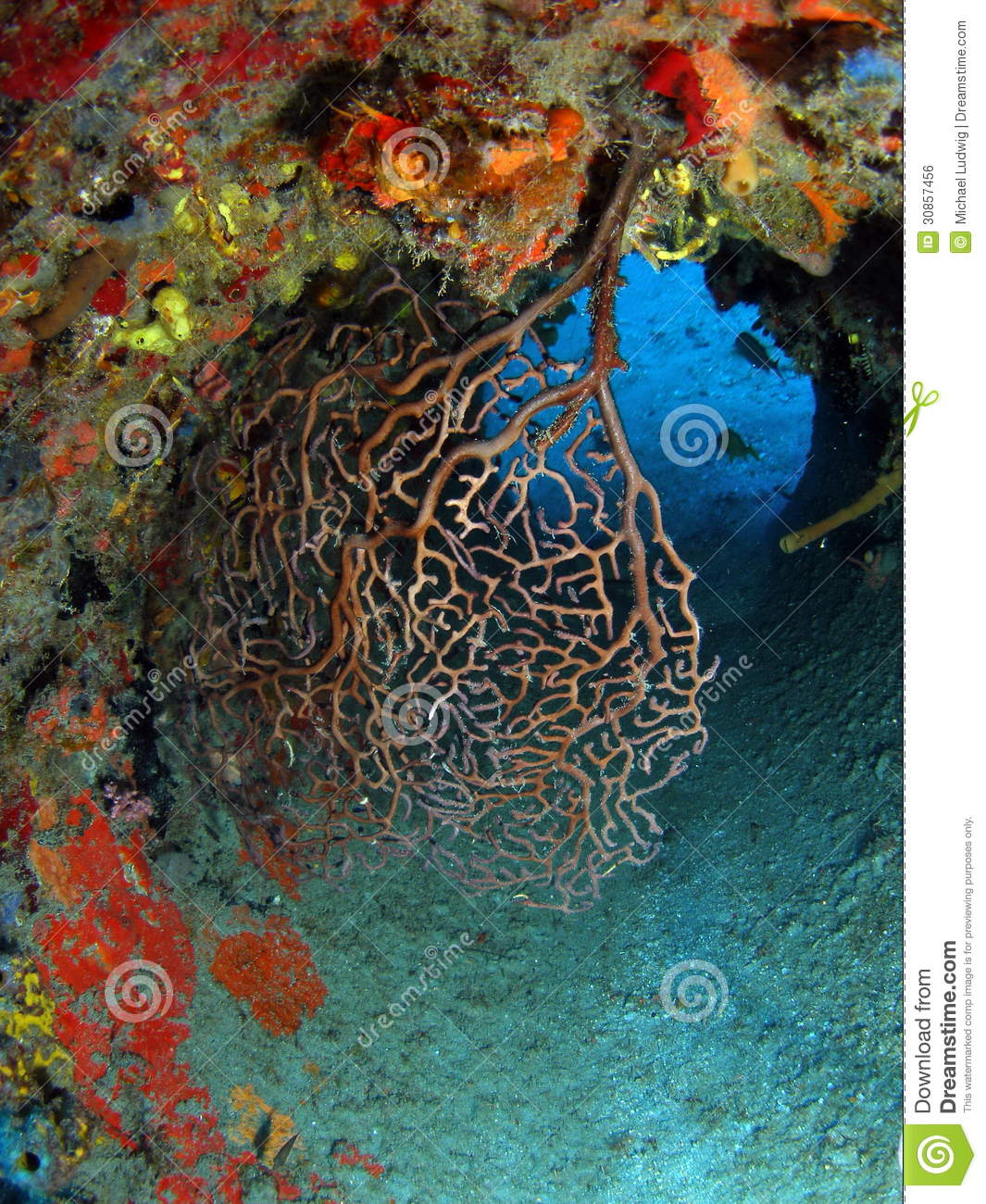 Florida Reefs And Wrecks Map.Coral Reef On Wreck Stock Photo Image Of Florida Saltwater 30857456