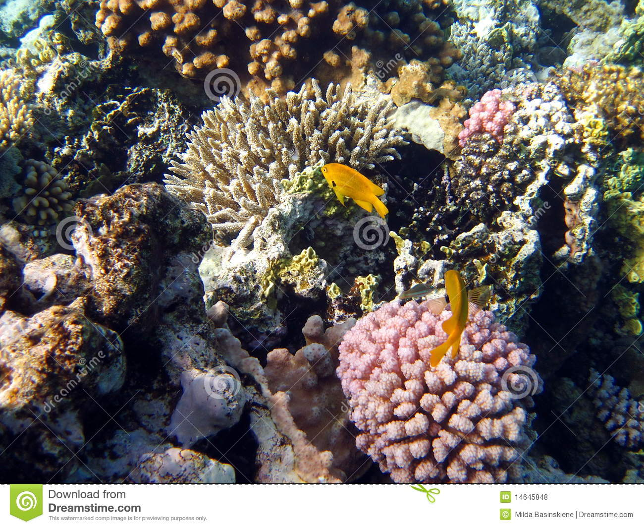 Coral reef fish yellow - photo#14