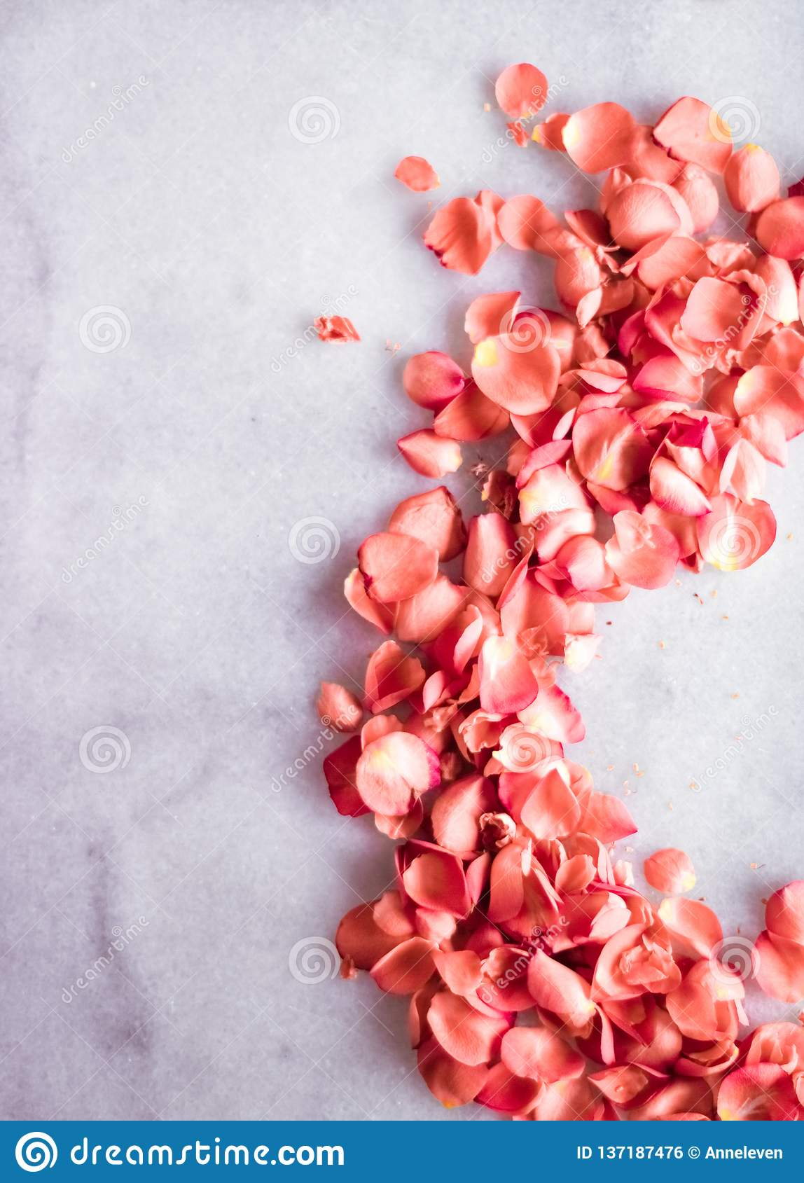 coral rose petals on marble, color of the year - flower backgrounds and holidays concept