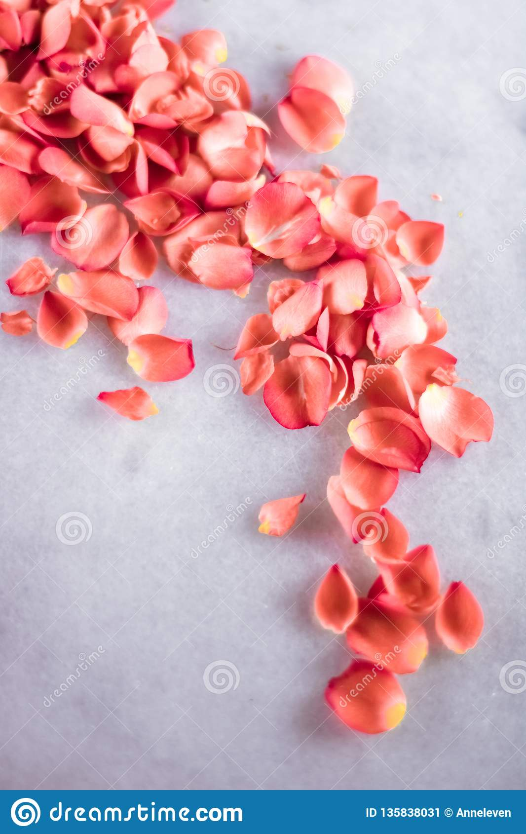 coral rose petals on marble, color of the year - flower backgrounds, holidays and floral art concept