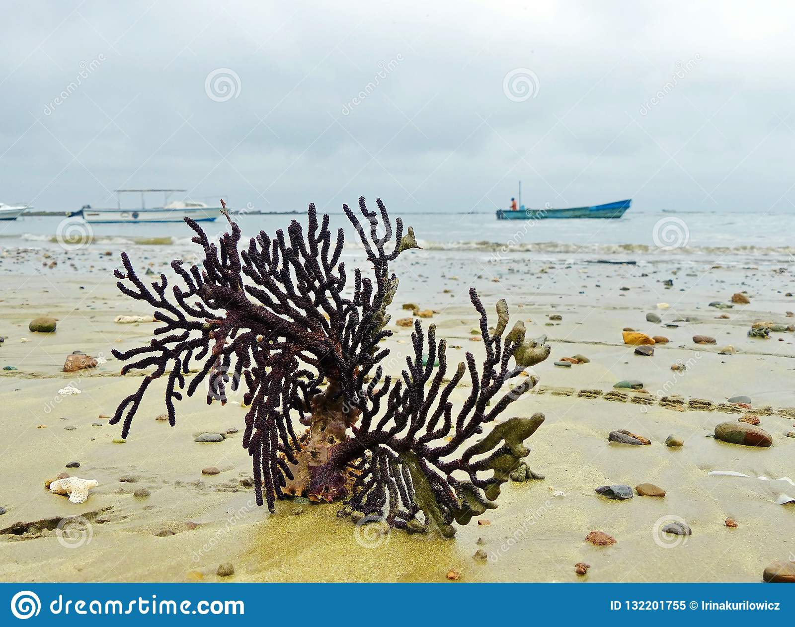 The coral on the sandy shore