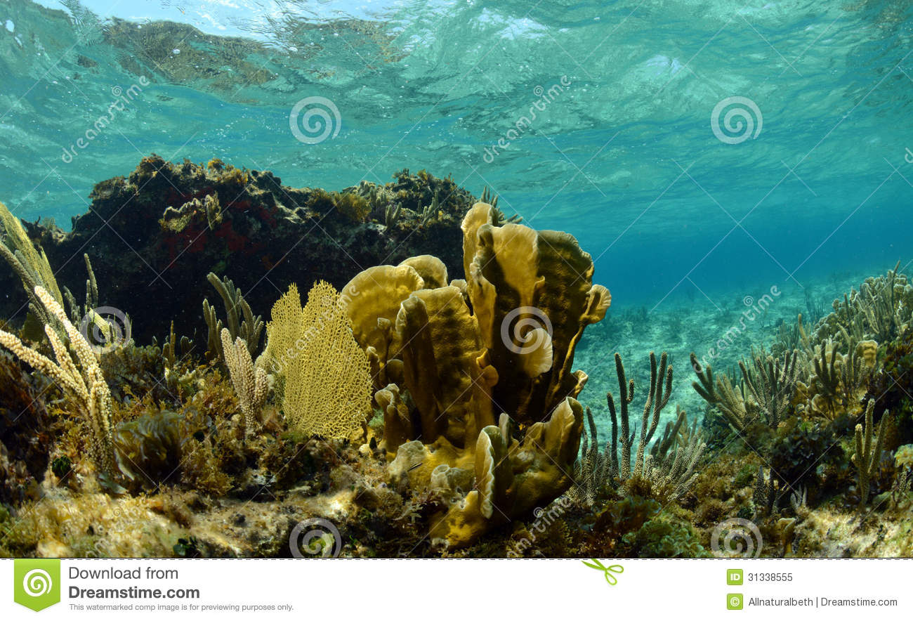 nature coral underwater landscape - photo #7