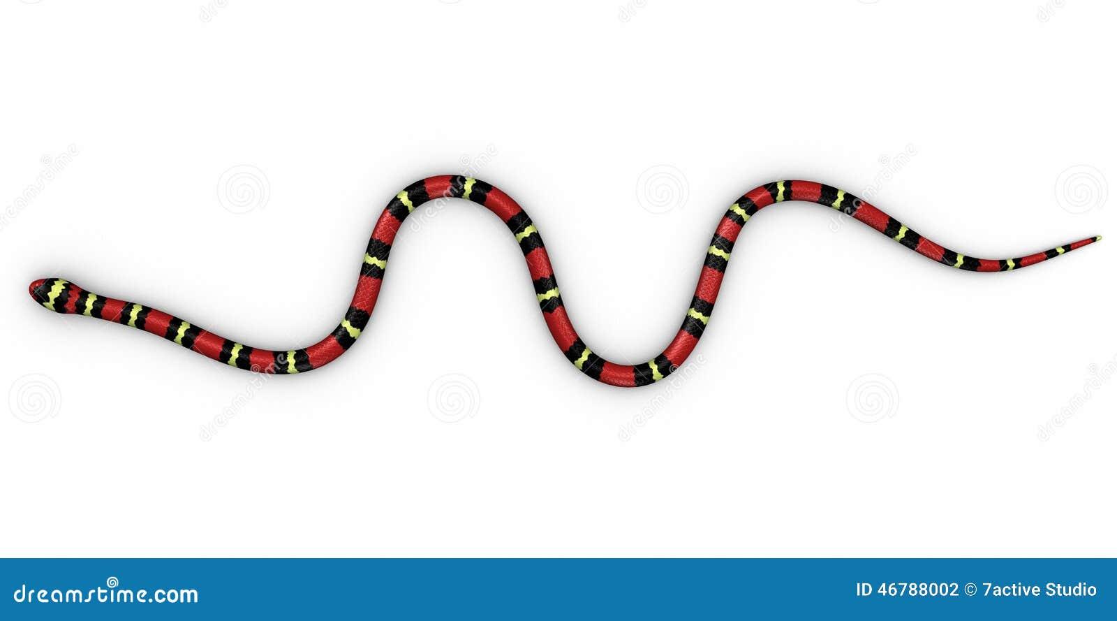 Coral snake stock illustration. Illustration of colorful - 46788002