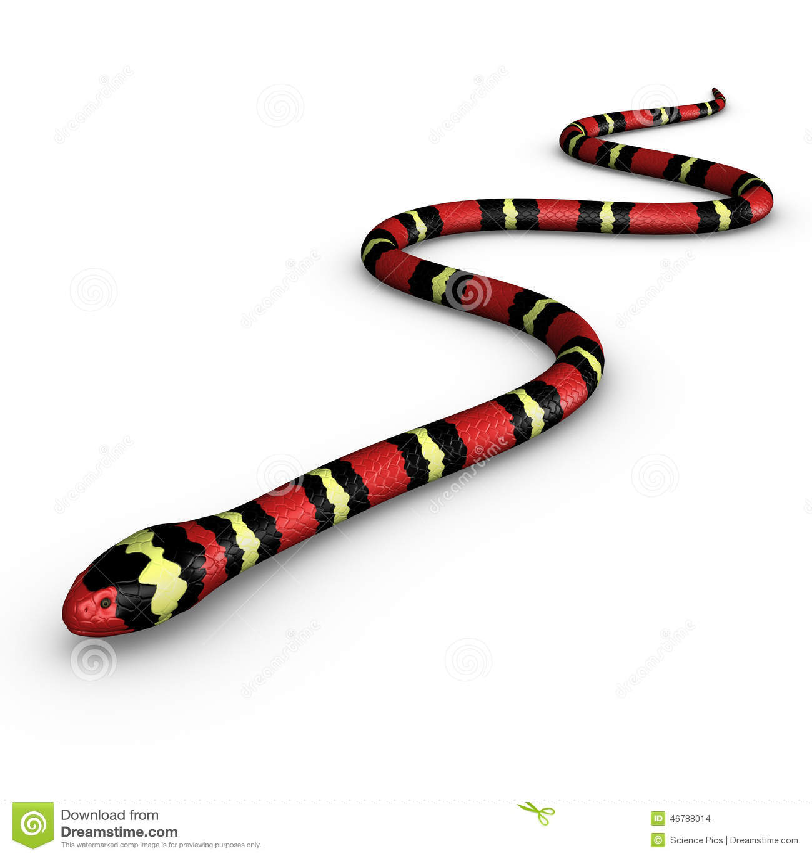 Coral Snake Stock Illustration
