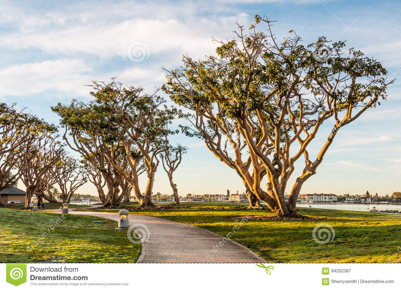 Coral Trees au nord de parc d Embarcadero à San Diego