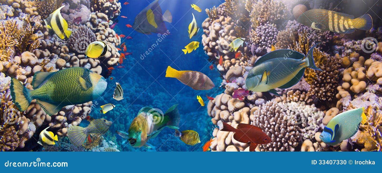 Coral y pescados