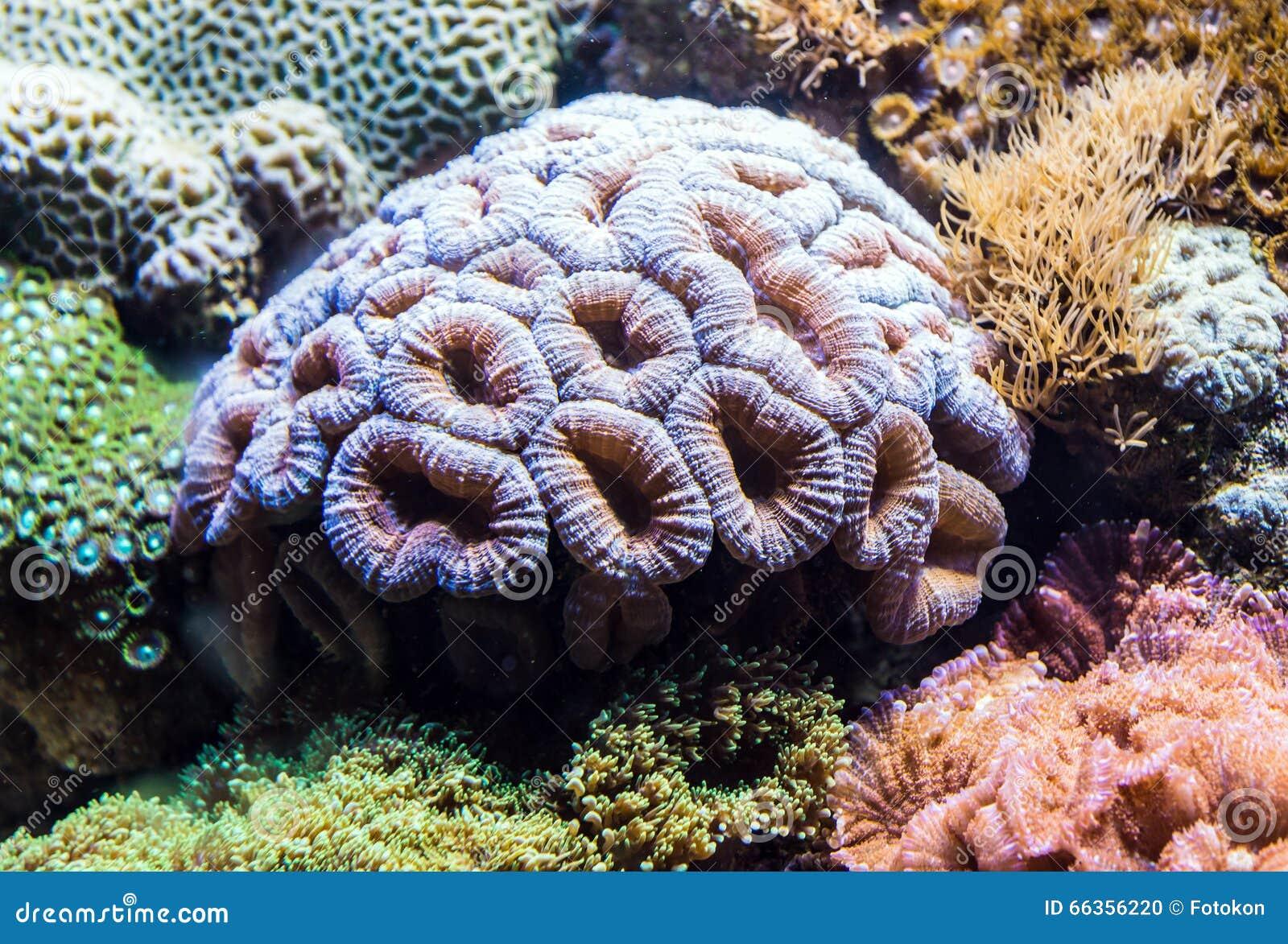 Coralli in acquario