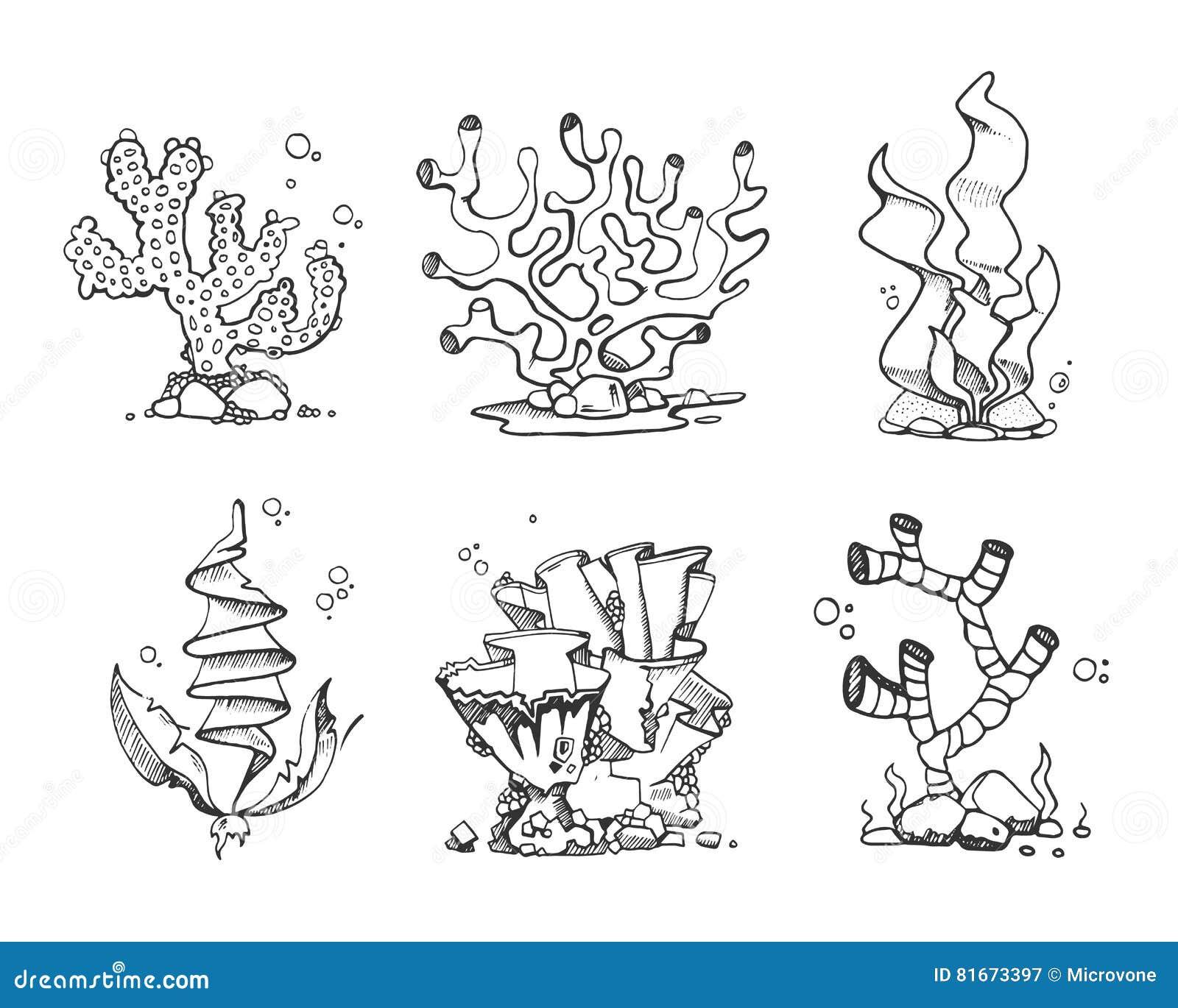 Coralli D Annata Ed Alghe A Disposizione Disegnati Scarabocchio