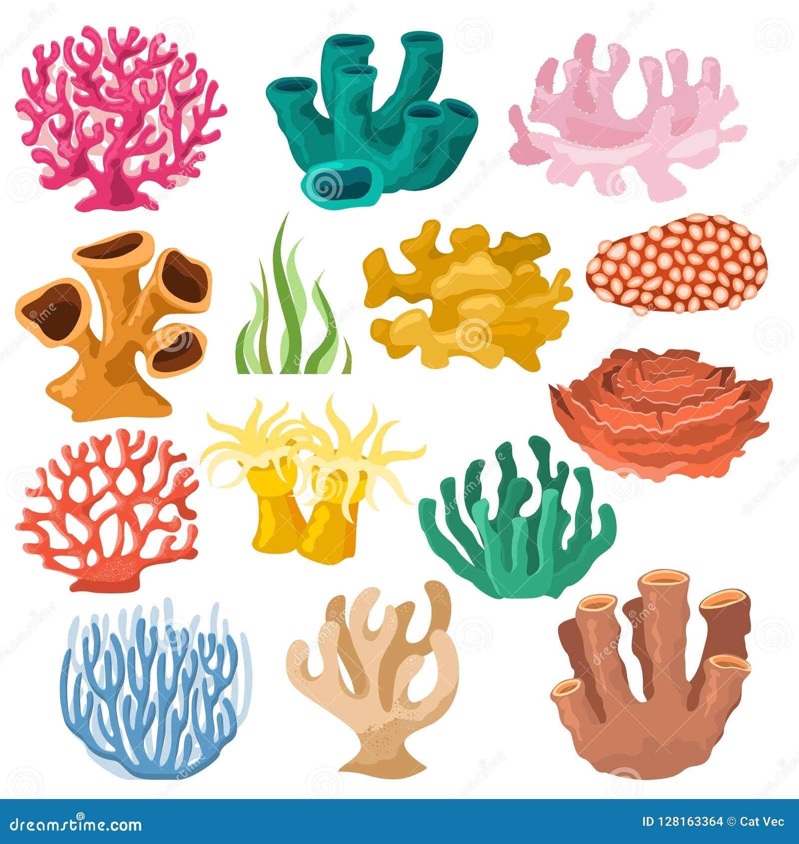 Coralline för korallvektorhav eller coralloidal uppsättning för exotisk illustration för cooralreef undersea av naturliga marin-
