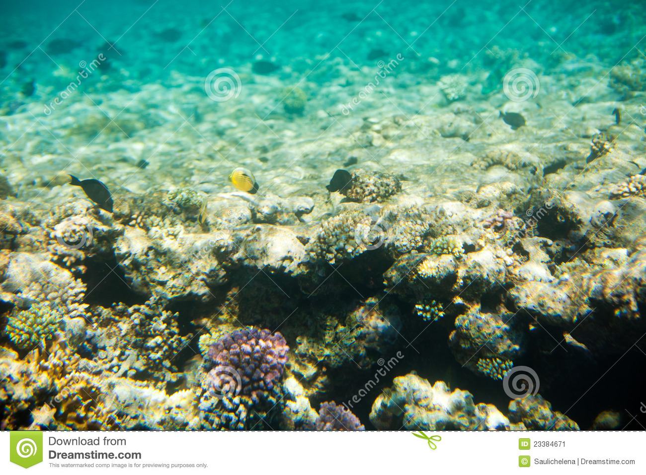 Corals and fish in the red sea royalty free stock image for Red sea fish