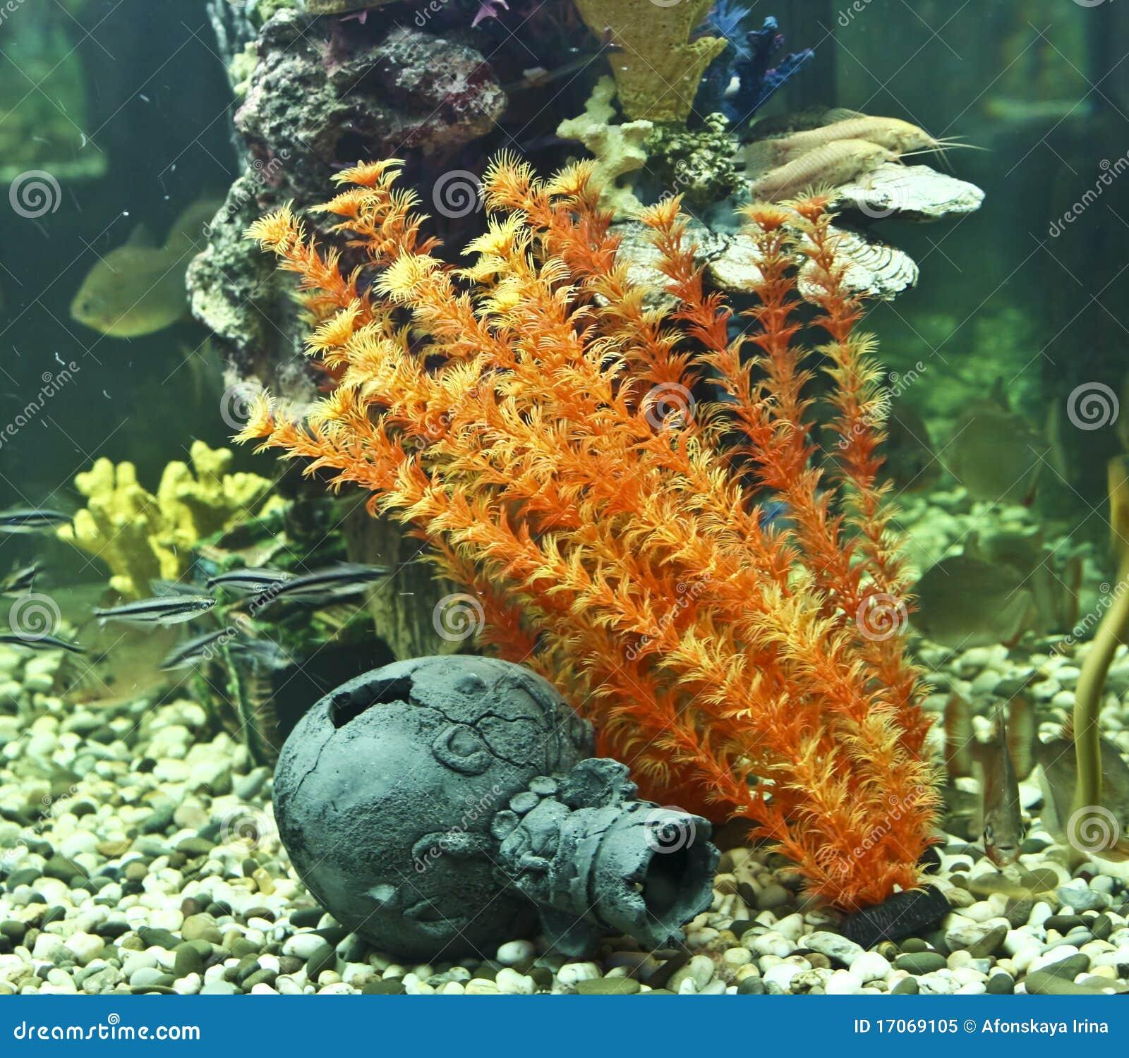 Coraux, algues et cruche, aquarium